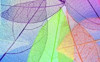 10 Best Images on Pinterest for Your Samsung A Quantum - #10 - Colorful Transparent Leaves