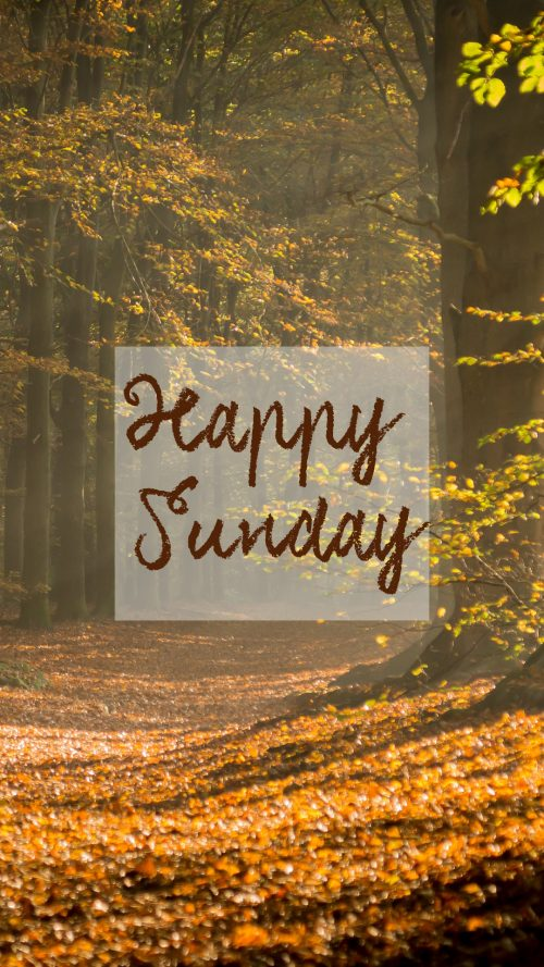 Happy Sunday Images with Autumn Forest in Morning