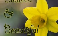 Images of Happy Sunday with Macro Photo of Daffodil Flower