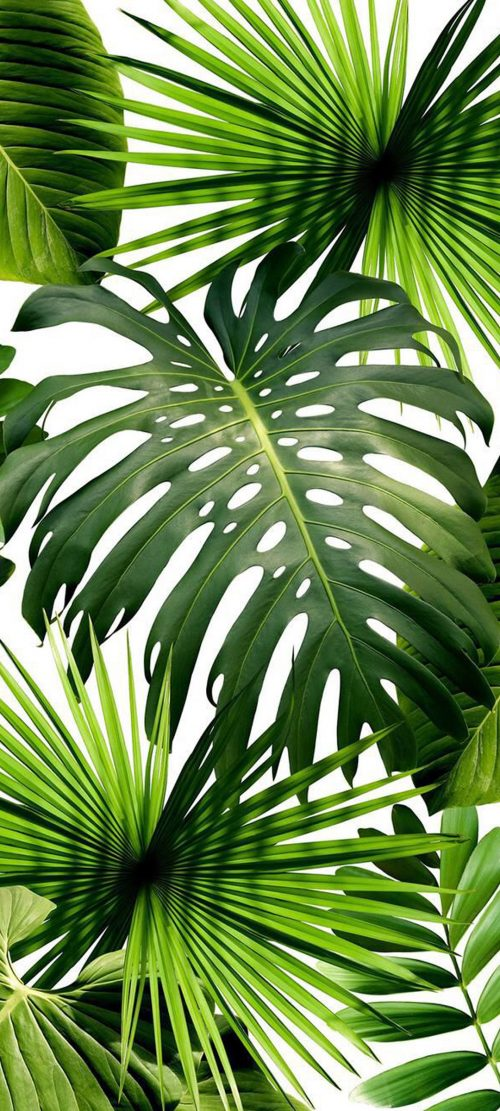Cool Phone Wallpapers for Xiaomi Redmi Note 9 Pro 5G – 06 Tropical Plants Leaves
