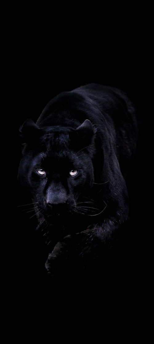 Dark Wallpaper for Mobile Phone with Picture of Black Panther