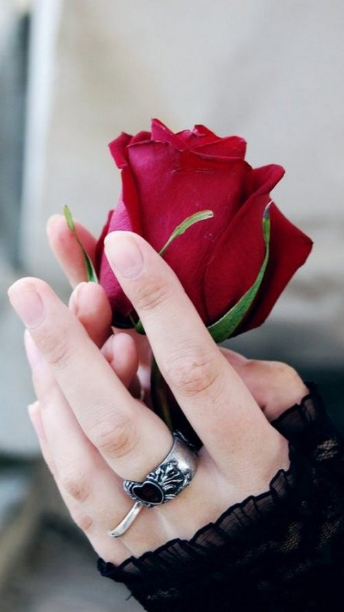 Pictures of Flower for Mobile Phone Wallpaper with Rose on Hand